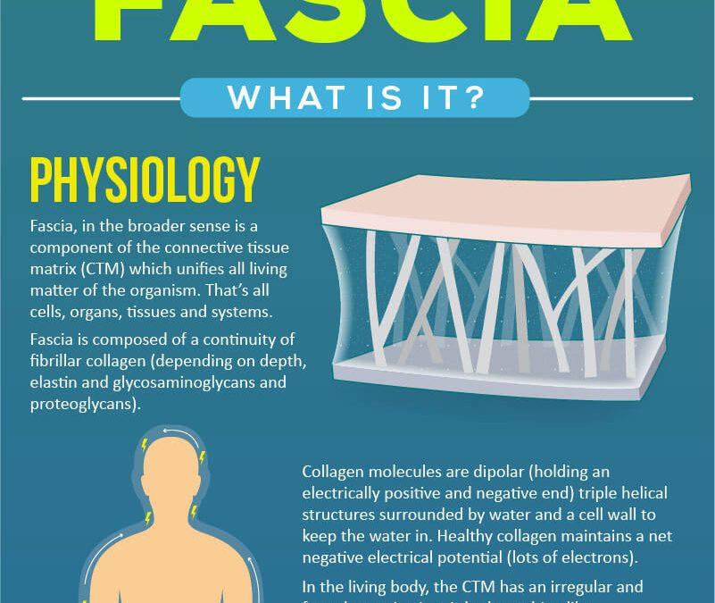 AMN Fascia. What Is It?